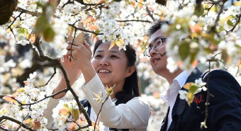 Pear blossoms attract visitors in Kunming, SW China