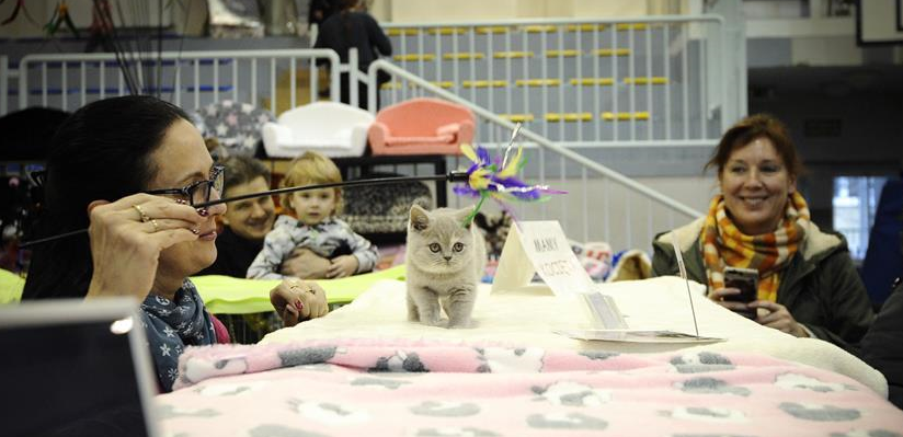 Highlights of cat show in Warsaw, Poland
